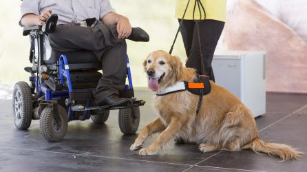 Man in wheelchair with Service Dog