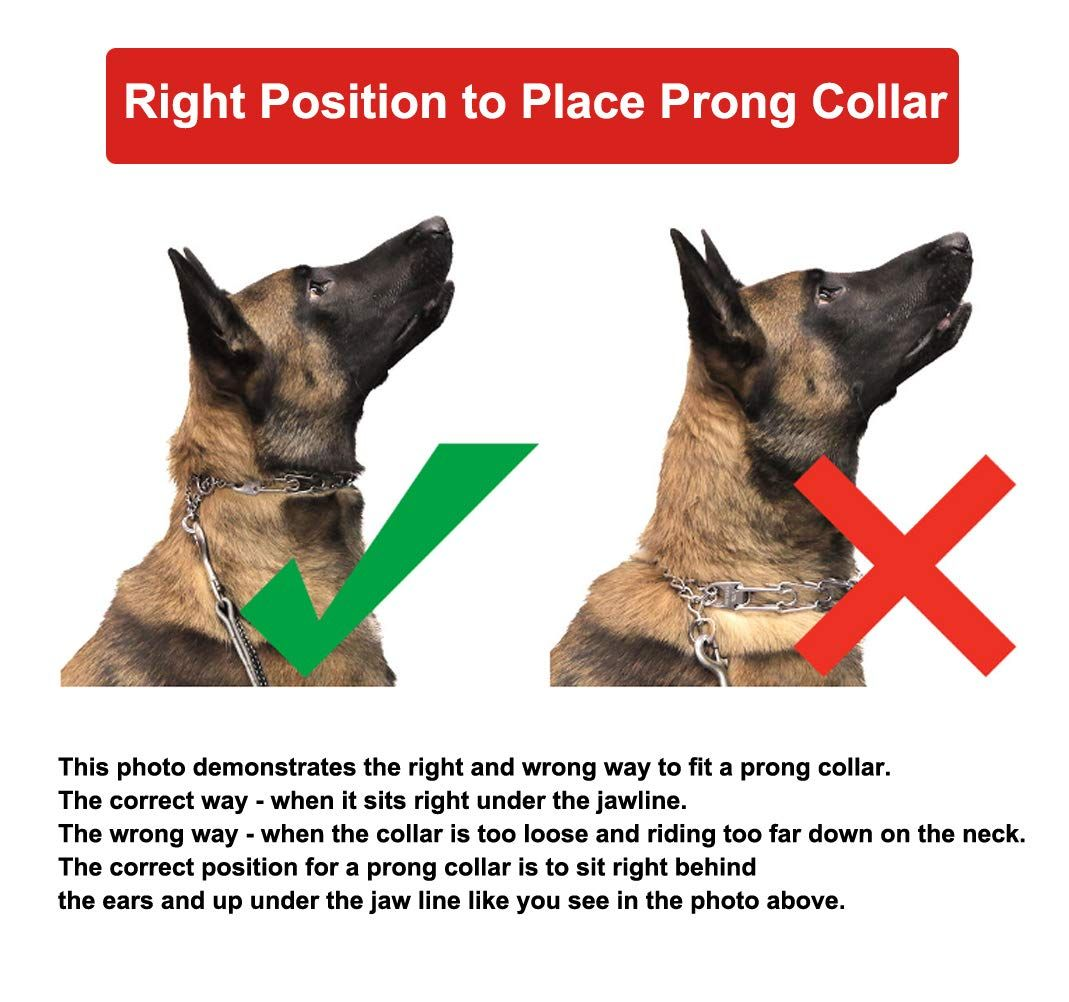 Right and Wrong Way to use a Prong Collar