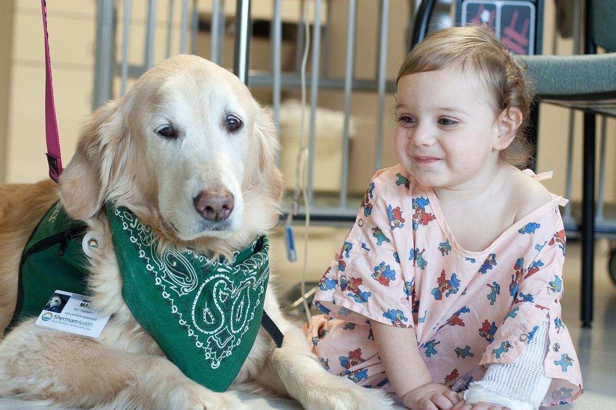 Therapy Dog at Sherman Hospital