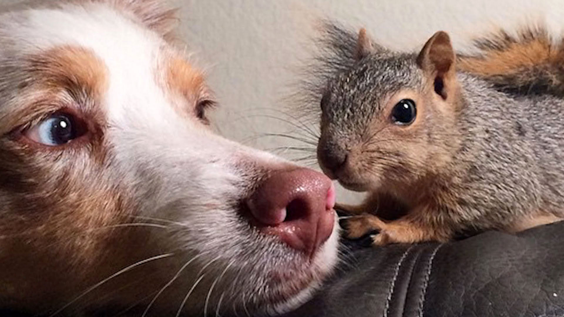 Dog and Squirel