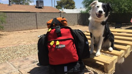 Search Dog Sony with Ready Pack