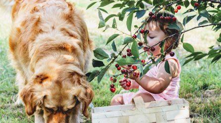 Allergen Alert Dog