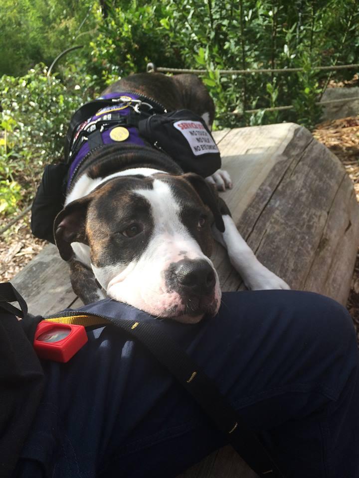 Service Dog Maurice Provides DPS