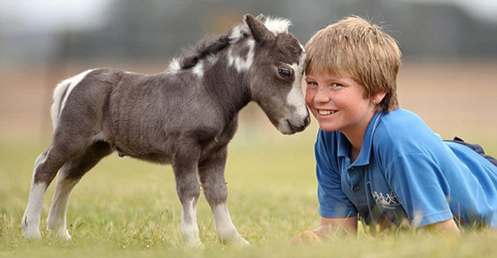 Miniature Horses as Service Animals