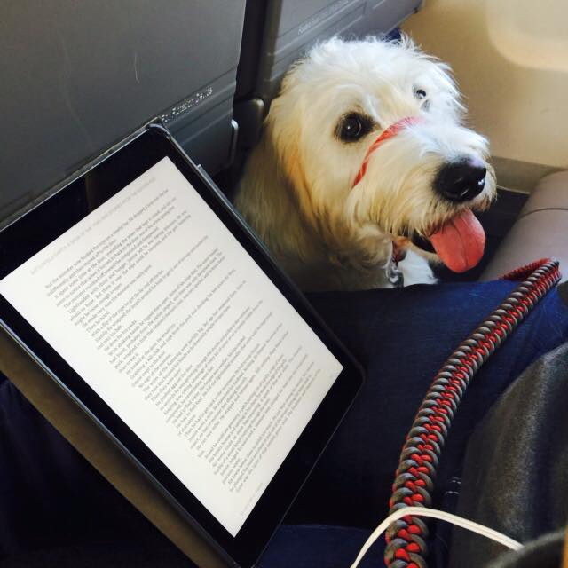 Service Dog Travel Policies by Airline
