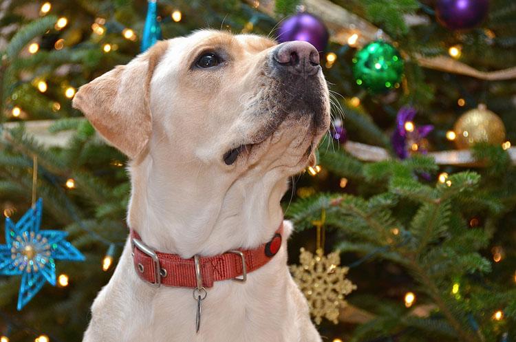 Lowcountry Christmas Service Dog Book PTSD