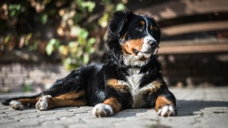 Spaying and Neutering Service Dogs
