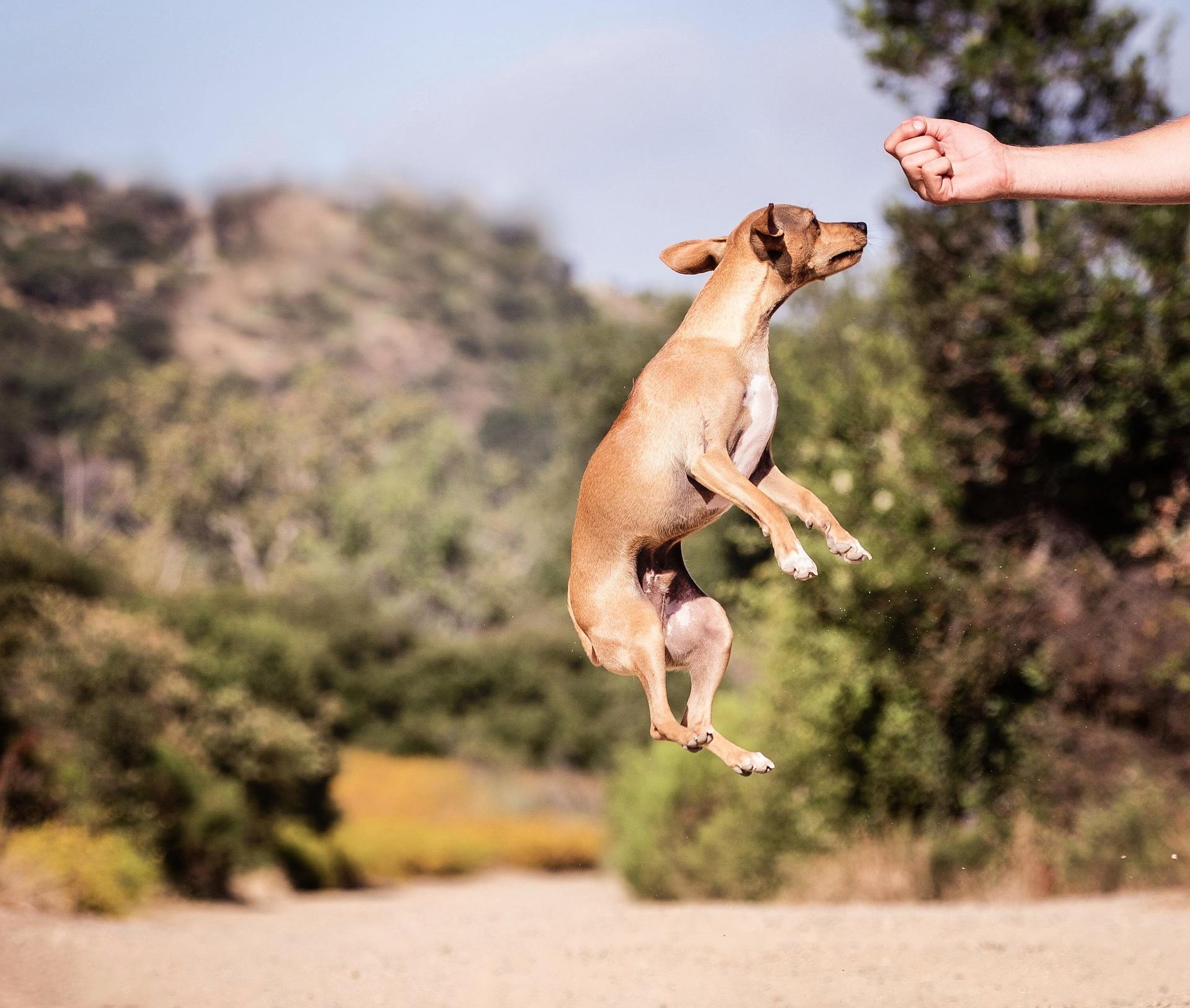 Dog Training Mistakes