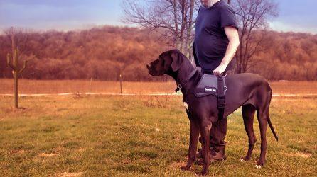 Service Dog with handler
