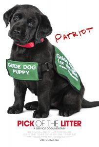 Patriot in his guide dog puppy in training vest