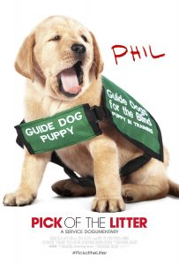 Phil in his guide dog puppy in training vest