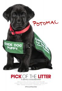 Potomac in his guide dog puppy in training vest