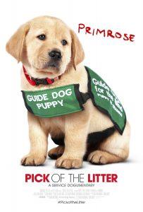 Primrose in her guide dog puppy in training vest