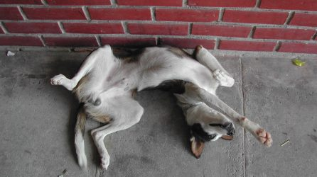 dog tricks playing dead