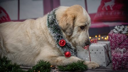 Holiday Service Dog travel