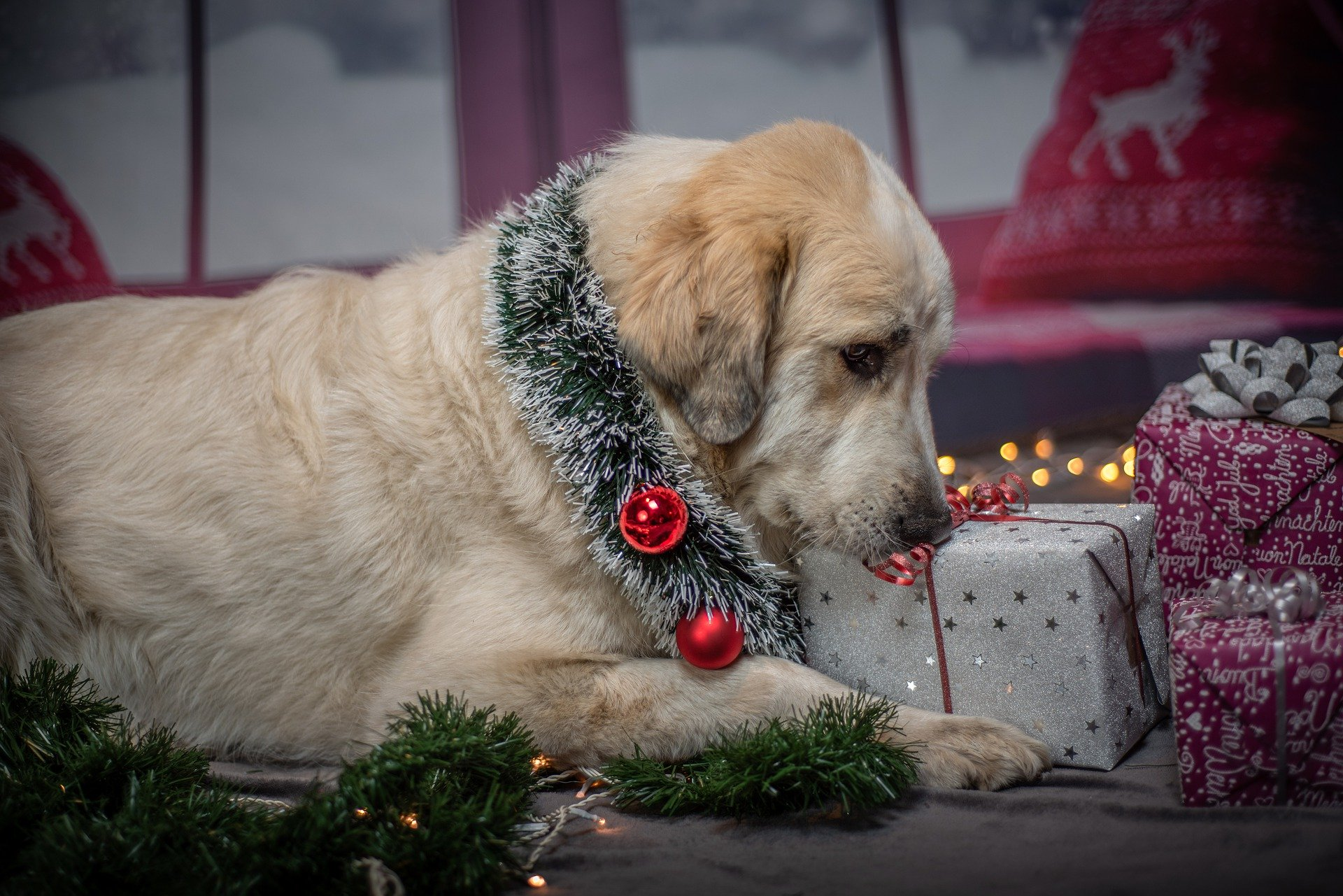 Holiday Service Dog travel
