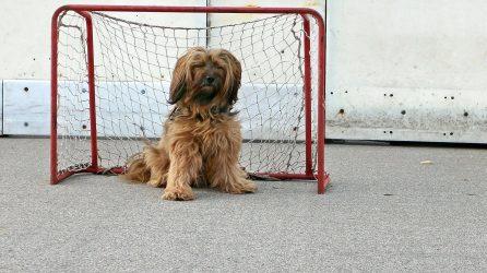 service dog training goals