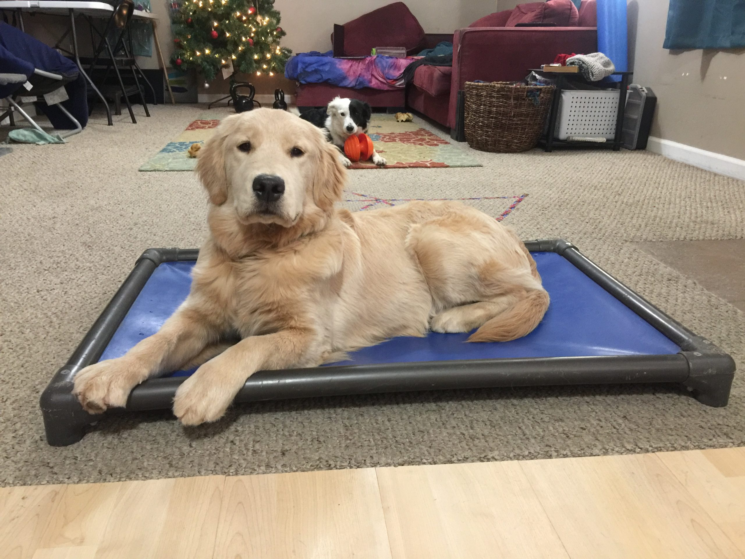 Stationing in Dog Training for Service Dogs