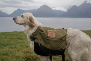 service dog backpacking tasks