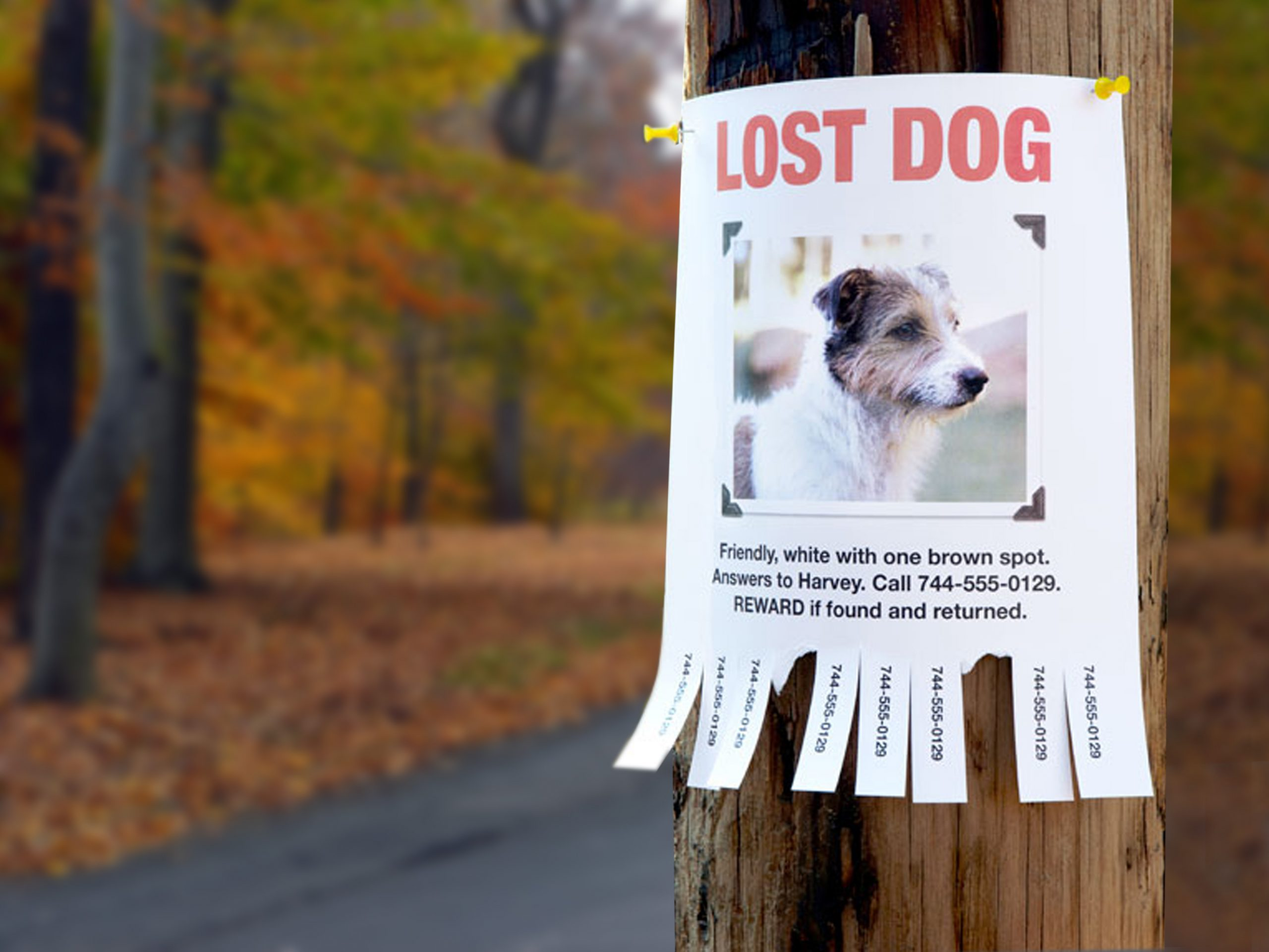 Lost Dog Poster Example