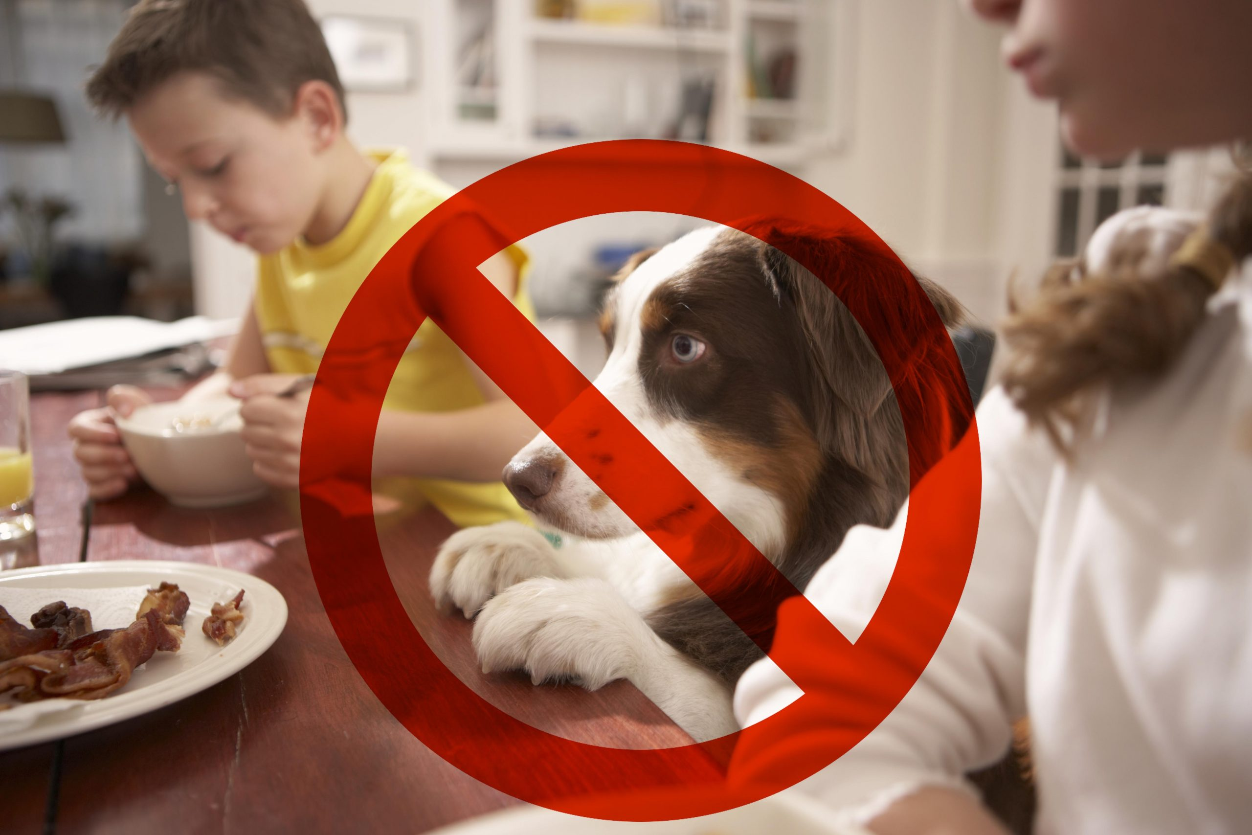 No dogs at the table