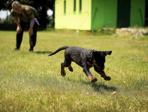service puppy training games