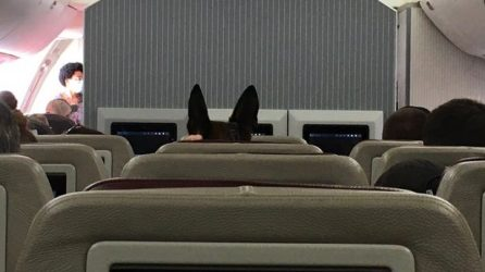 A dog's distinctive ears can be seen as they are evacuated from Kabul ( Image: @PSFAERO/Twitter)
