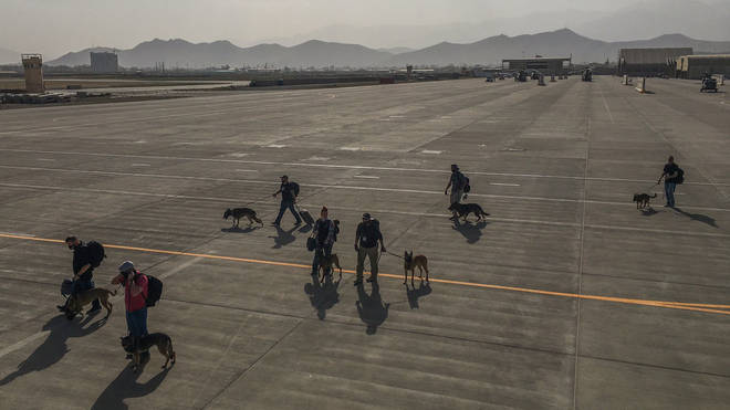 MWDs and handlers crossing tarmac