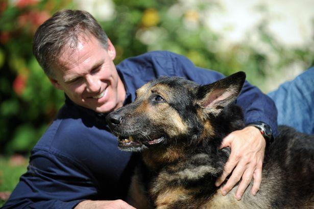 German shepherd Trakr with owner James Symington in Los Angeles, California. ( Image: GABRIEL BOUYS/AFP via Getty Images)