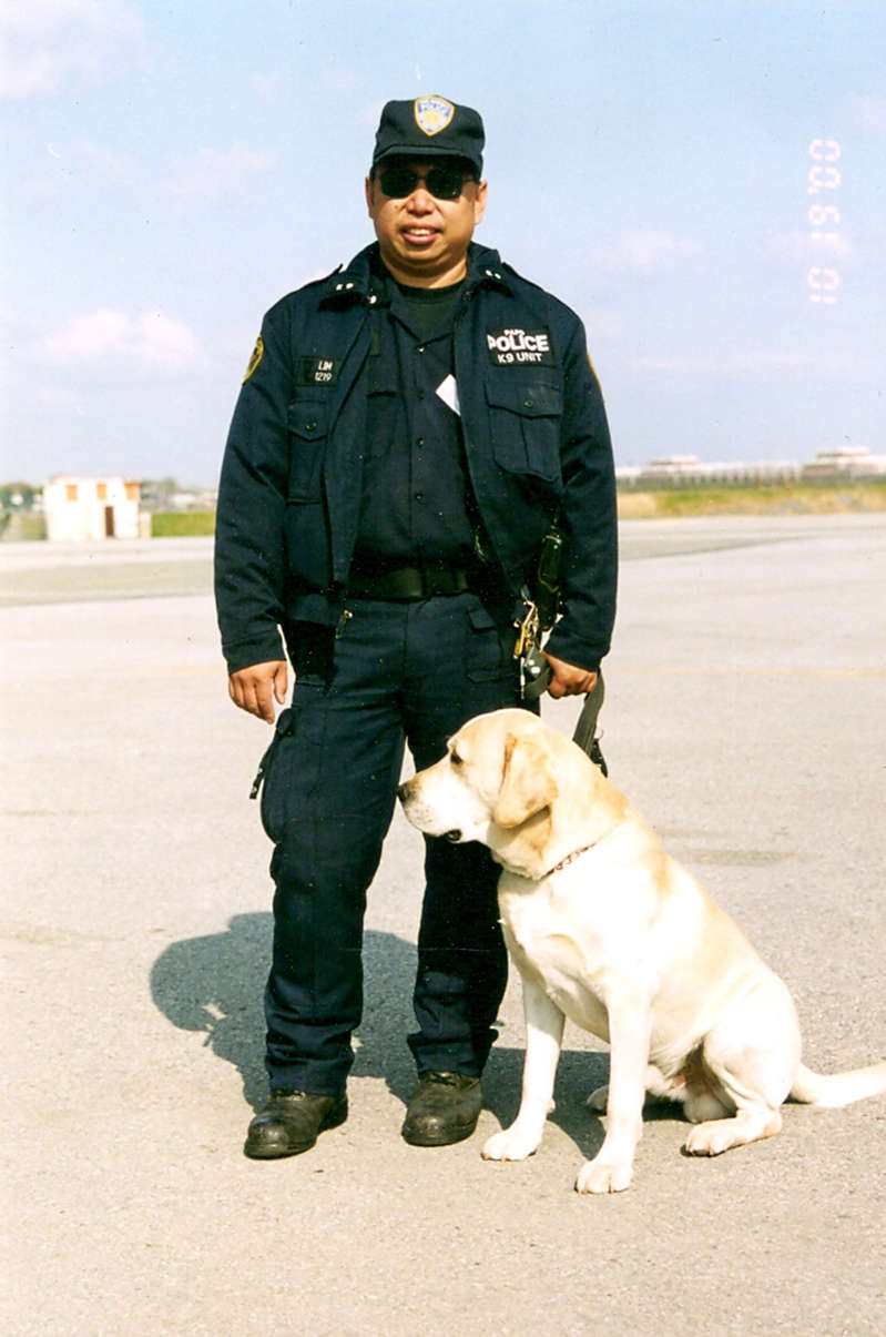 © Collection 9/11 Memorial & Museum, Gift of Lt. David W. Lim, Port Authority Police Department Lim with his K-9, a yellow Labrador…