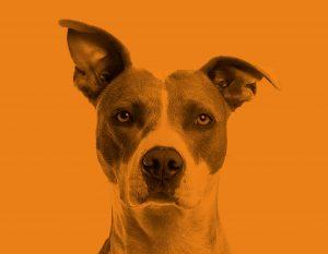 Dog on Orange Background